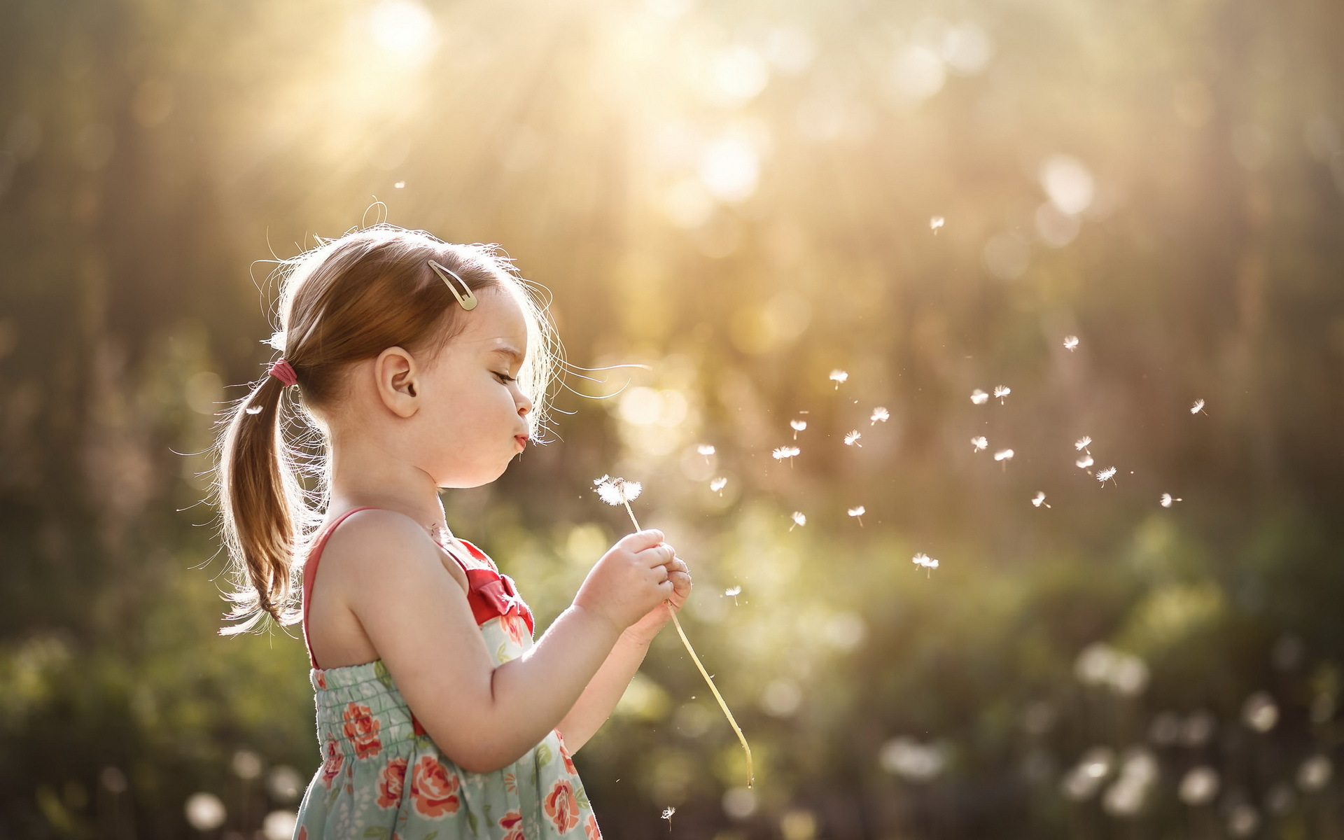 Child hd wallpaper background image 1920x1200 id - Dandelion hd wallpapers 1080p ...