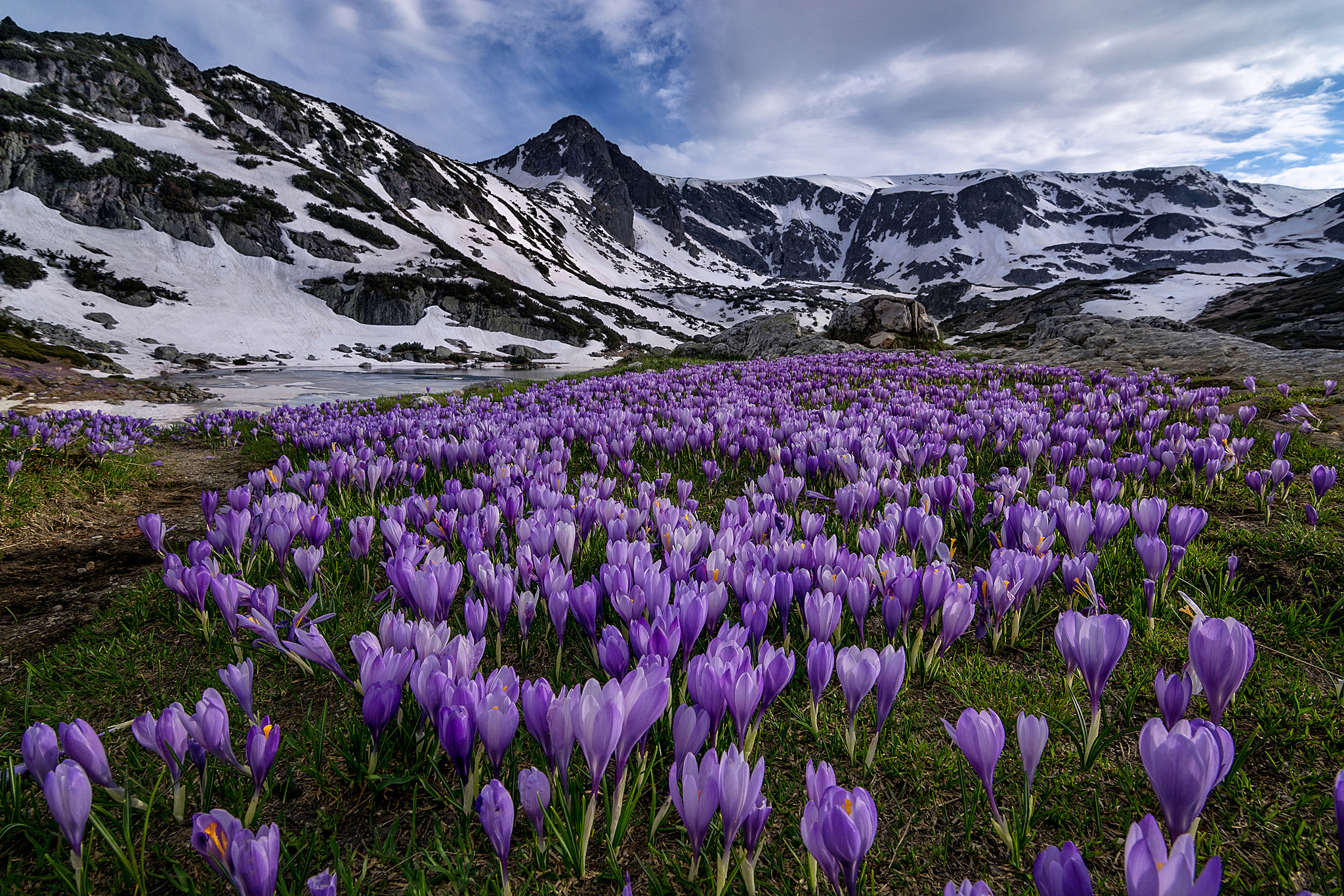 Crocuses blooming in the mountains in spring hd wallpaper for Paesaggi di primavera per desktop