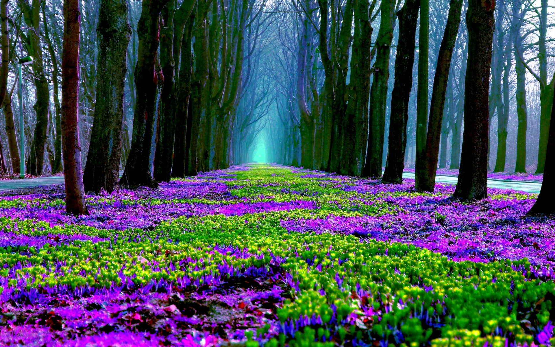 Spring flowers in forest full hd wallpaper and background for Forest floor definition