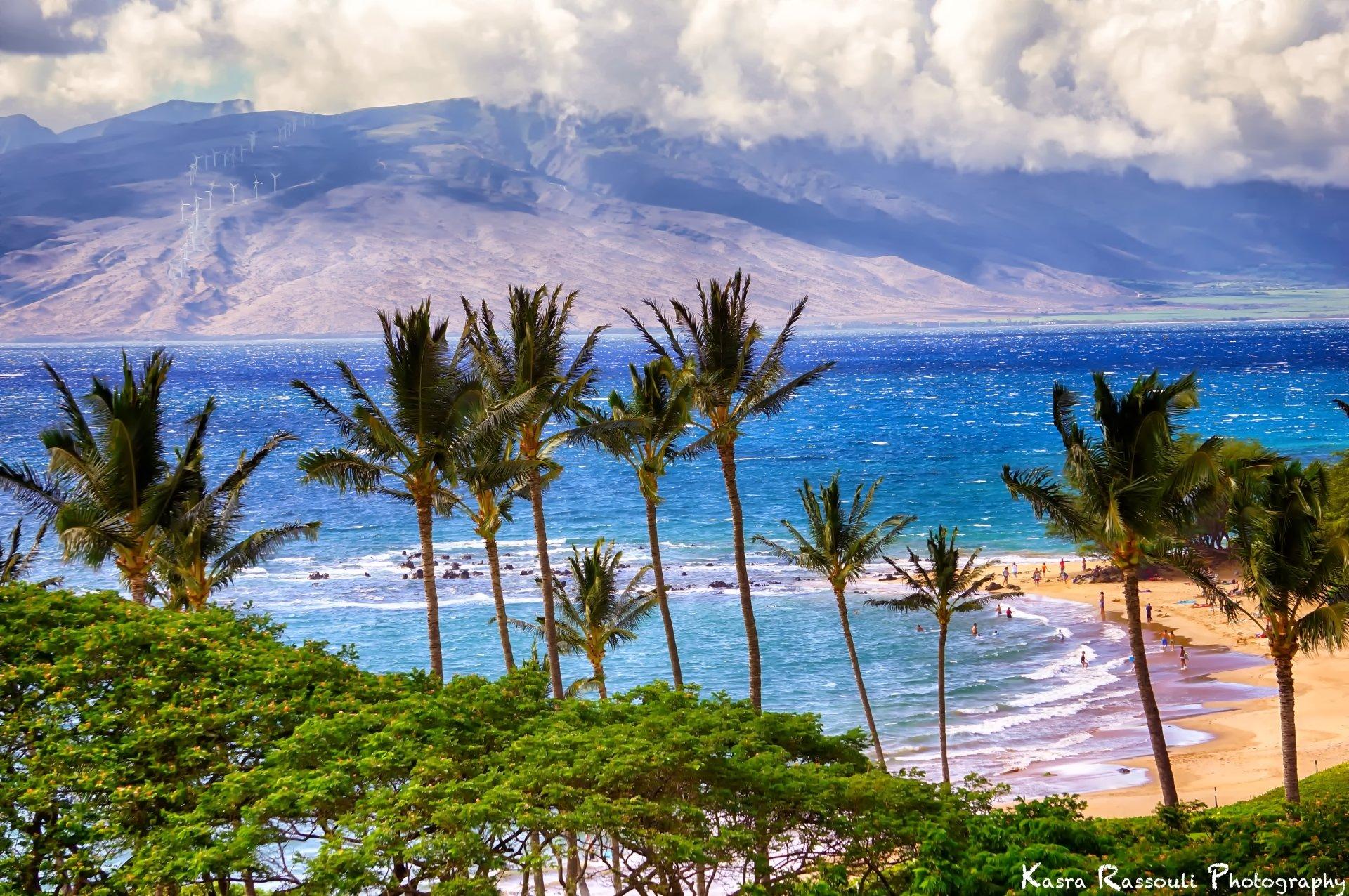 Palm Tree Beach 4k Hd Desktop Wallpaper For 4k Ultra Hd Tv: Palm Trees On The Beach 4k Ultra HD Wallpaper