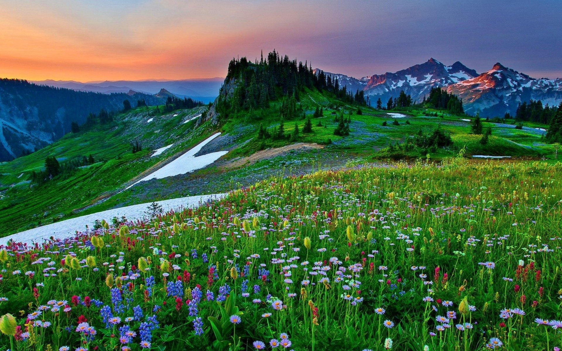Earth - Spring  Field Earth Landscape Flower Mountain Wildflower Tree Wallpaper