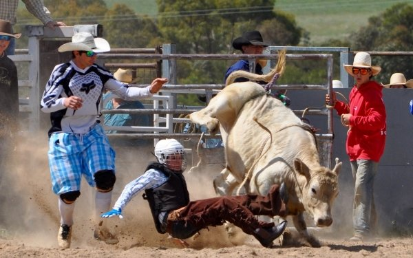 Sports Rodeo Bull Cowboy HD Wallpaper | Background Image