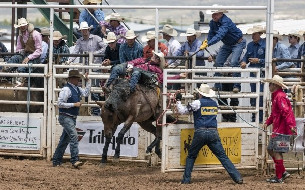 Sports Rodeo Horse Cowboy HD Wallpaper | Background Image
