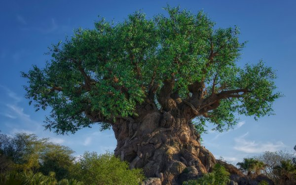 Earth Tree Trees Carvings HD Wallpaper | Background Image