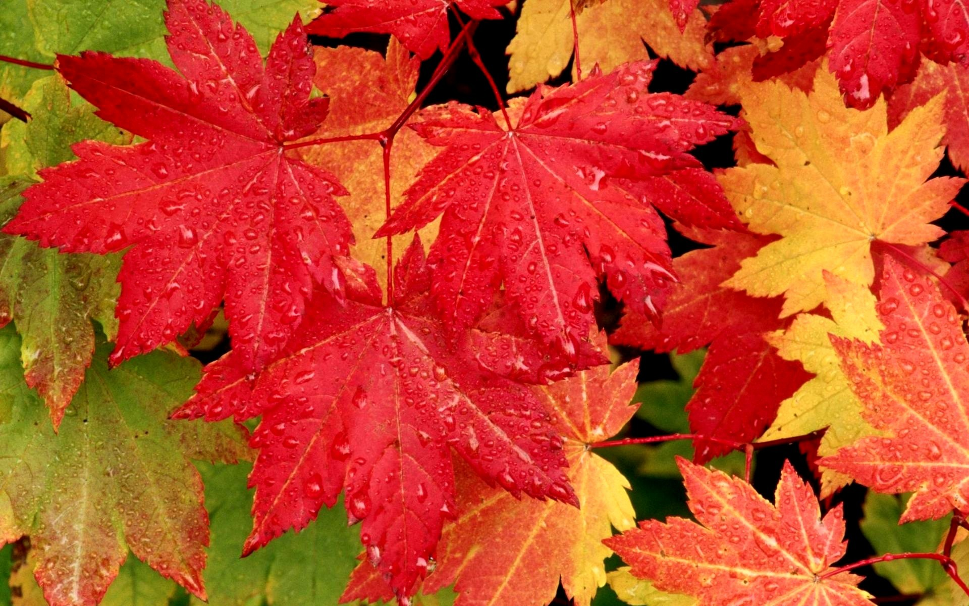 Wet Autumn Leaves HD Wallpaper | Background Image ...