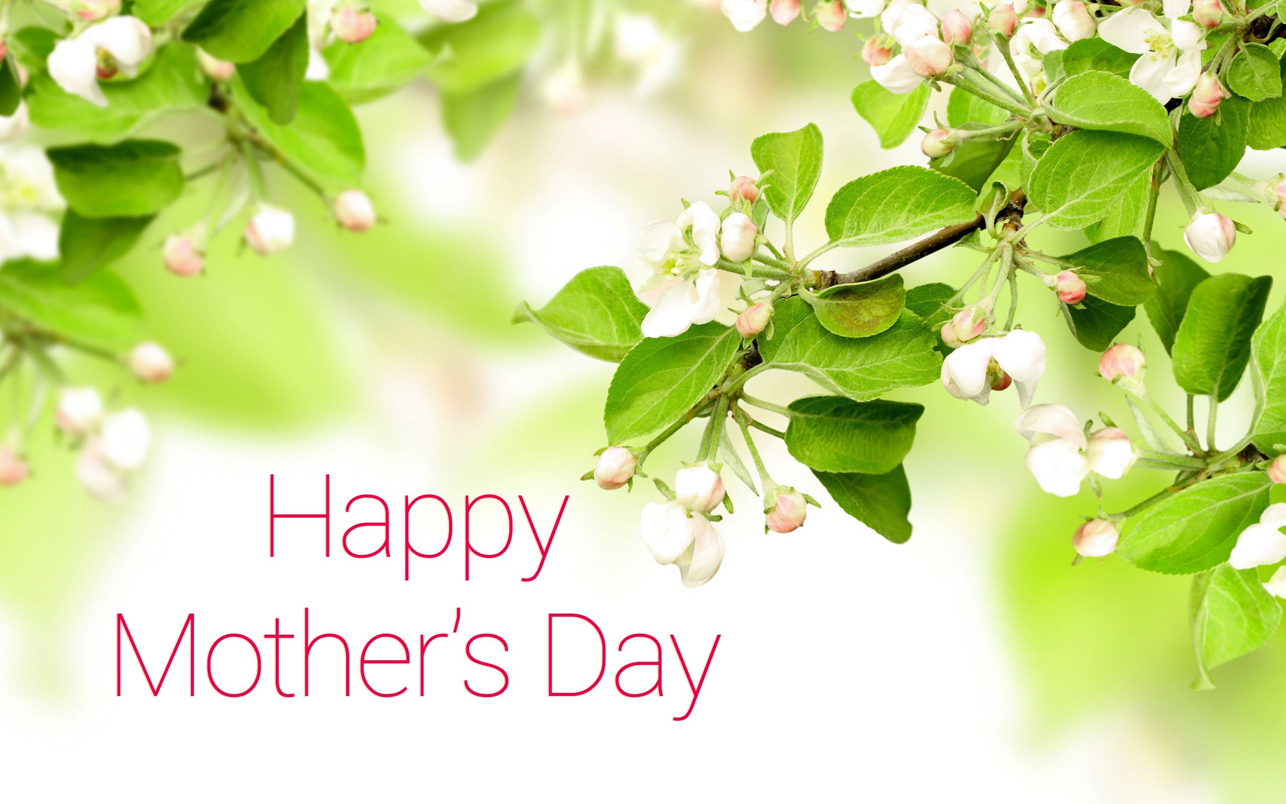 Happy Mother S Day Hd Wallpaper Background Image 2560x1600