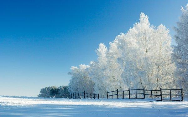 Tierra/Naturaleza Invierno Naturaleza Snow Árbol Cerca Parque Fondo de pantalla HD | Fondo de Escritorio