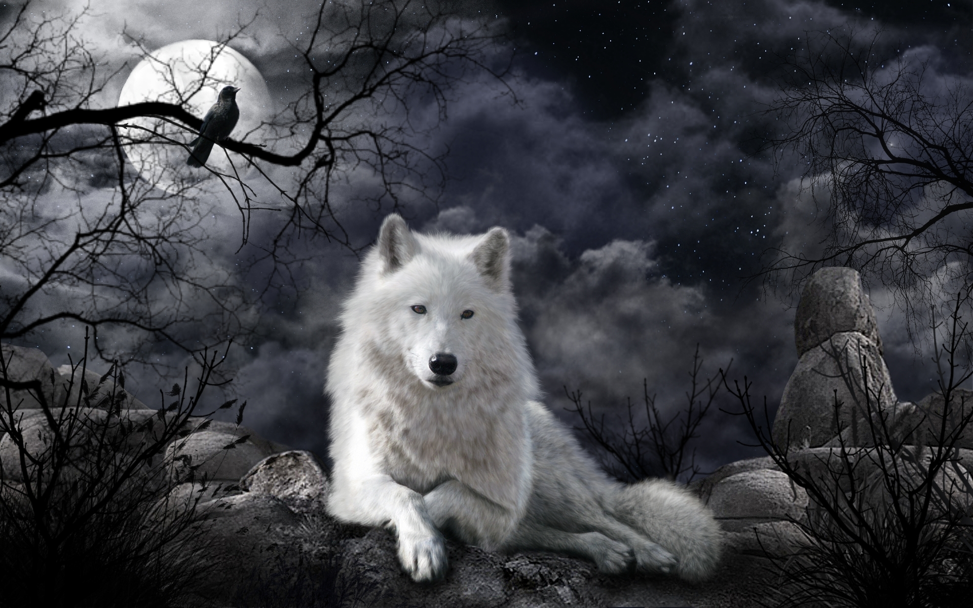 White wolf at night full hd wallpaper and background image for Markise balkon mit tapete gothic