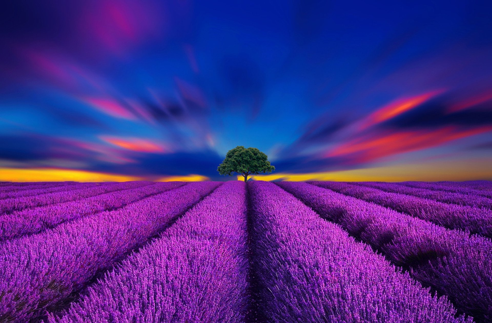 Lavender Field Sunset Hd Wallpaper Background Image 1920x1263 Id 702031 Wallpaper Abyss