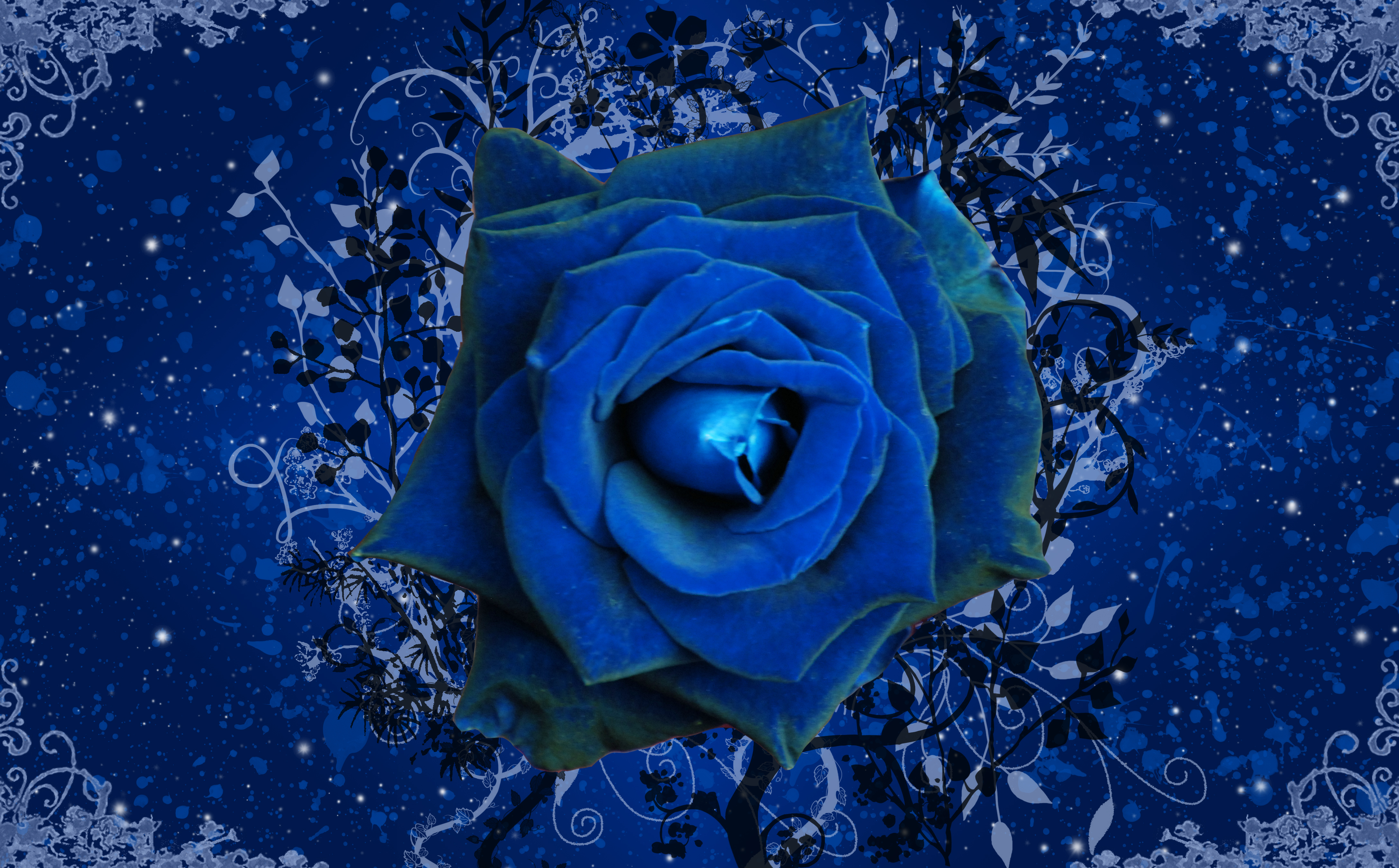 blue rose 4k ultra hd wallpaper | background image | 4350x2700 | id