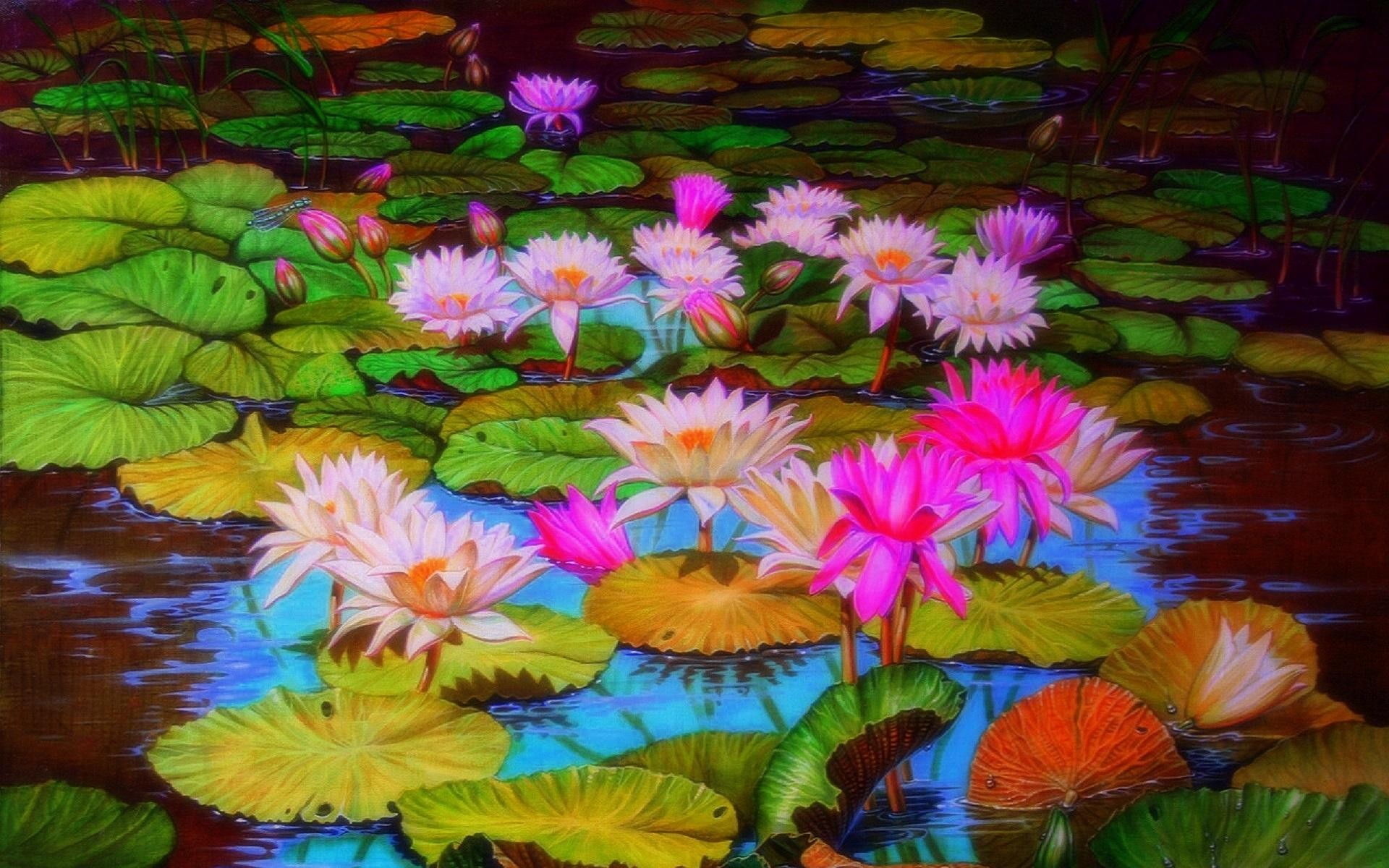 Pond With Lotus Flowers Hd Wallpaper Background Image 1920x1200