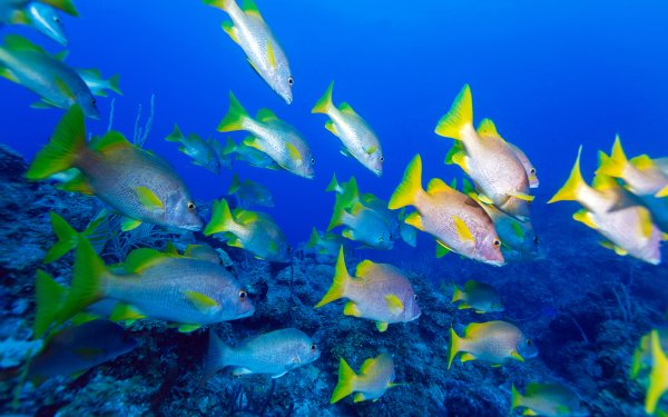 Animal Fish Fishes Underwater Sea Reef HD Wallpaper   Background Image