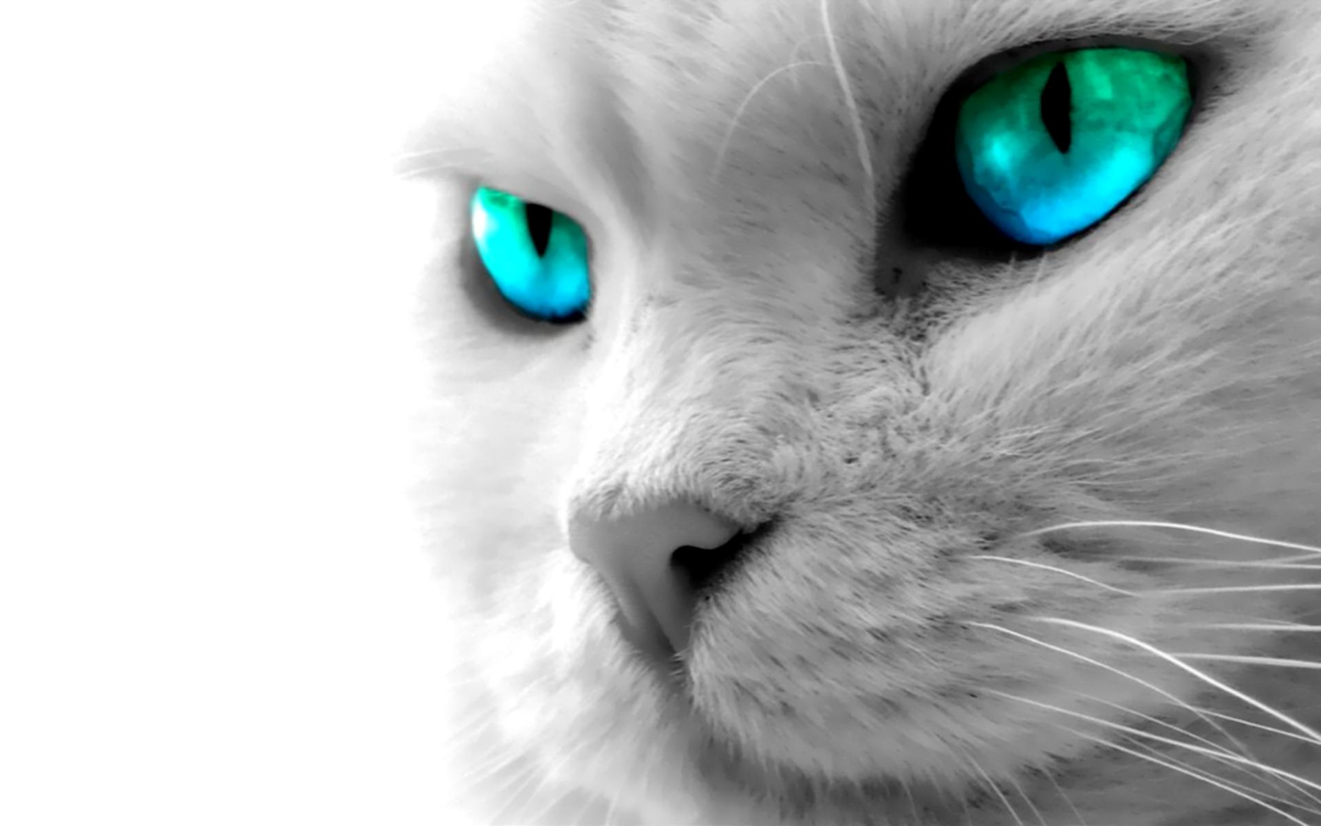 Animal - Cat  Photography Feline Pet Animal Wallpaper