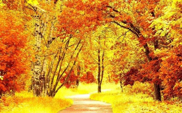Man Made Road Fall Foliage Tree Birch HD Wallpaper | Background Image