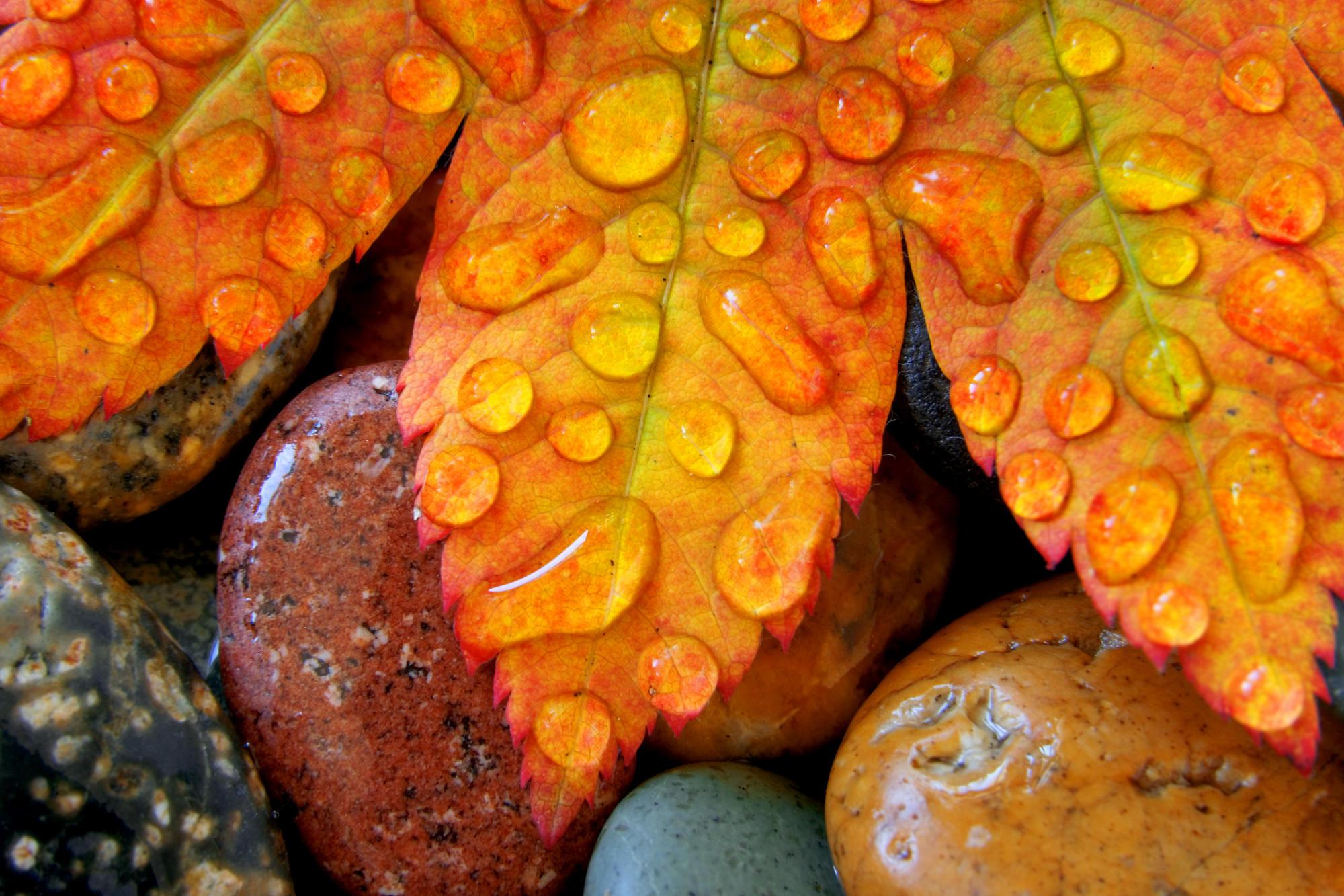 Earth - Leaf  Wallpaper