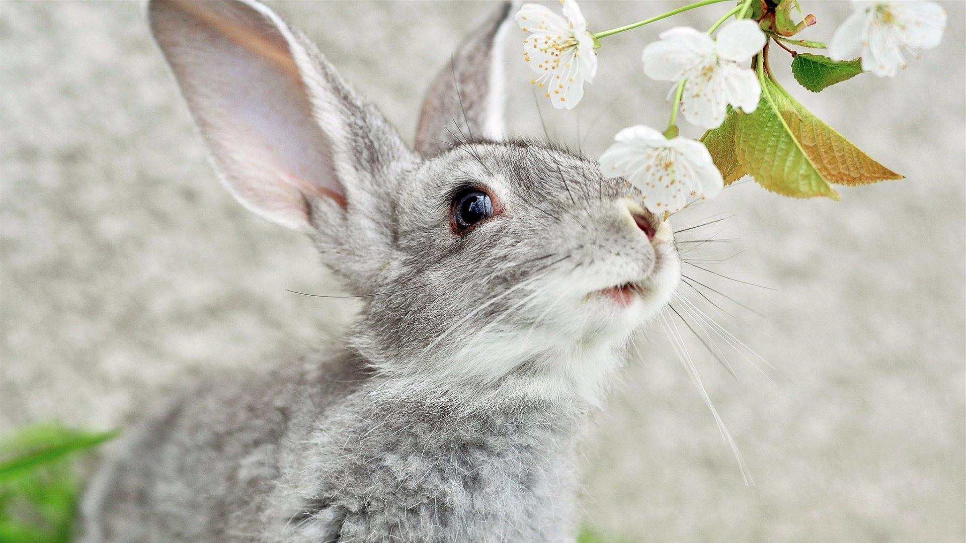 Cute White Rabbit Wallpapers For Desktop: Cute Rabbits HD Wallpaper