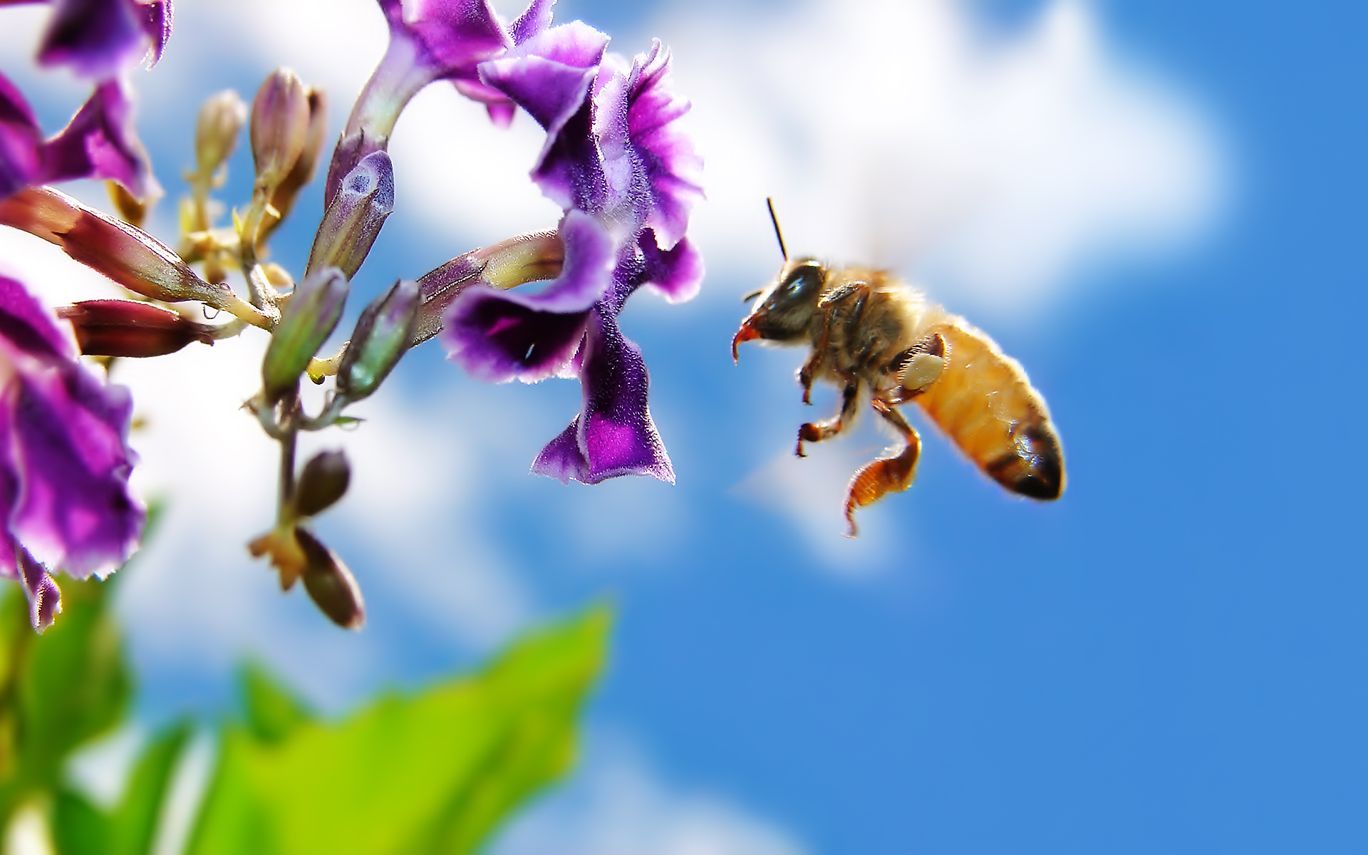 Honey Bees On Flowers Wallpaper