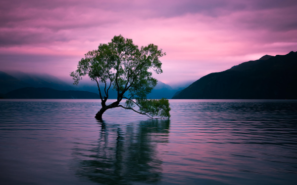 Earth Tree Trees Silhouette Lake Sunset Pink Lonely Tree HD Wallpaper | Background Image
