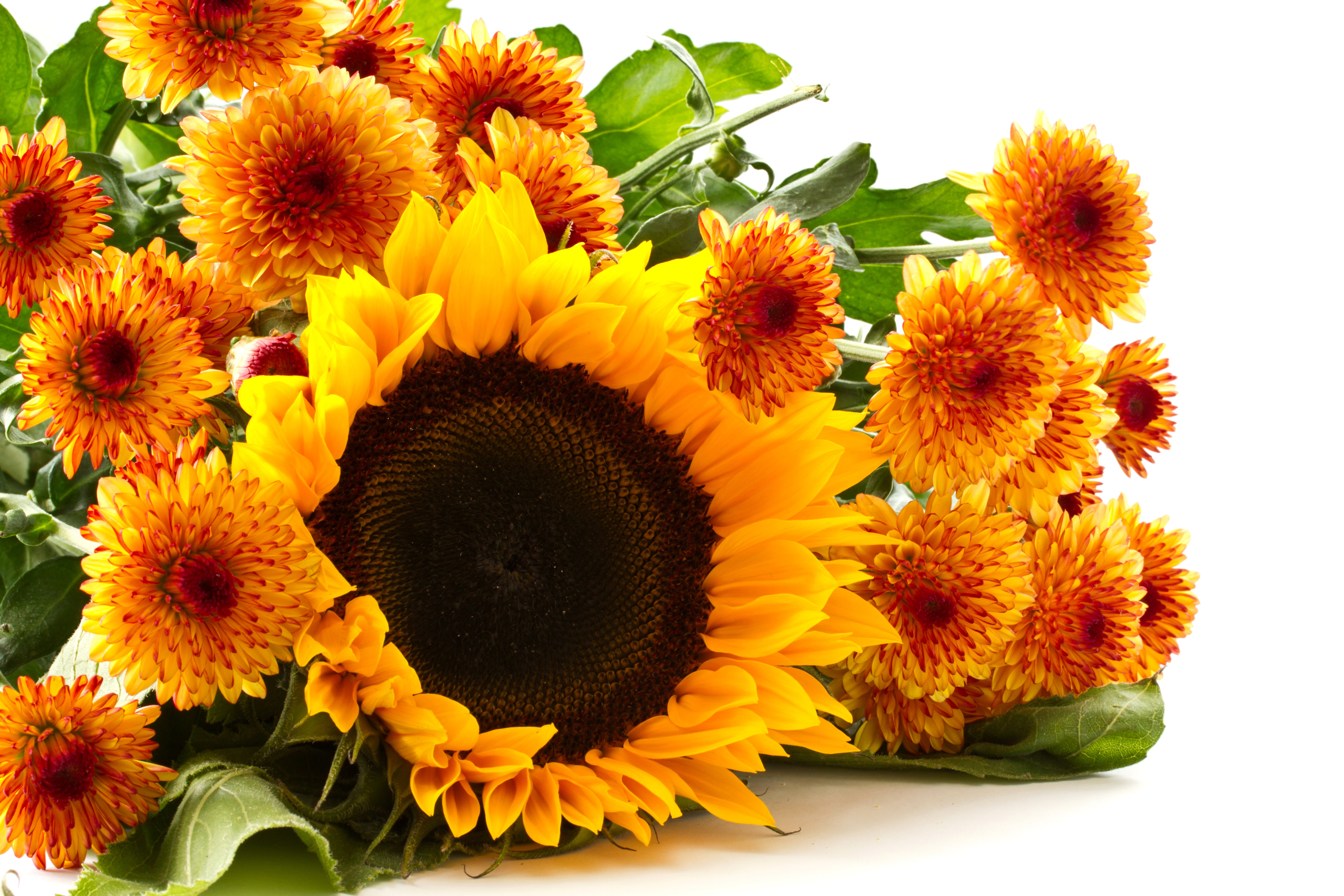 76 4k Ultra Hd Sunflower Wallpapers Background Images
