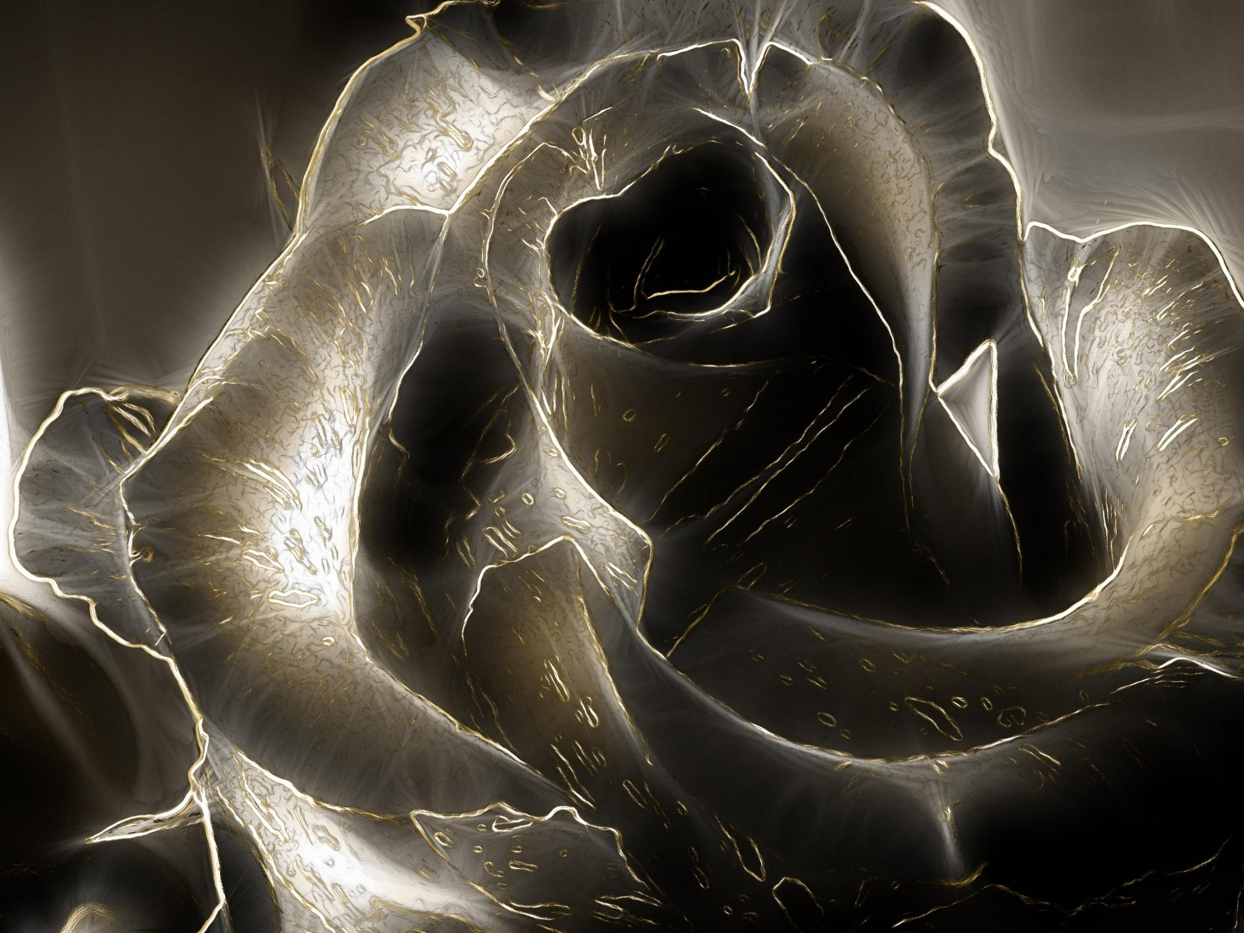 Closeup Of A Black Rose Hd Wallpaper Background Image 2560x1920 Id 726695 Wallpaper Abyss