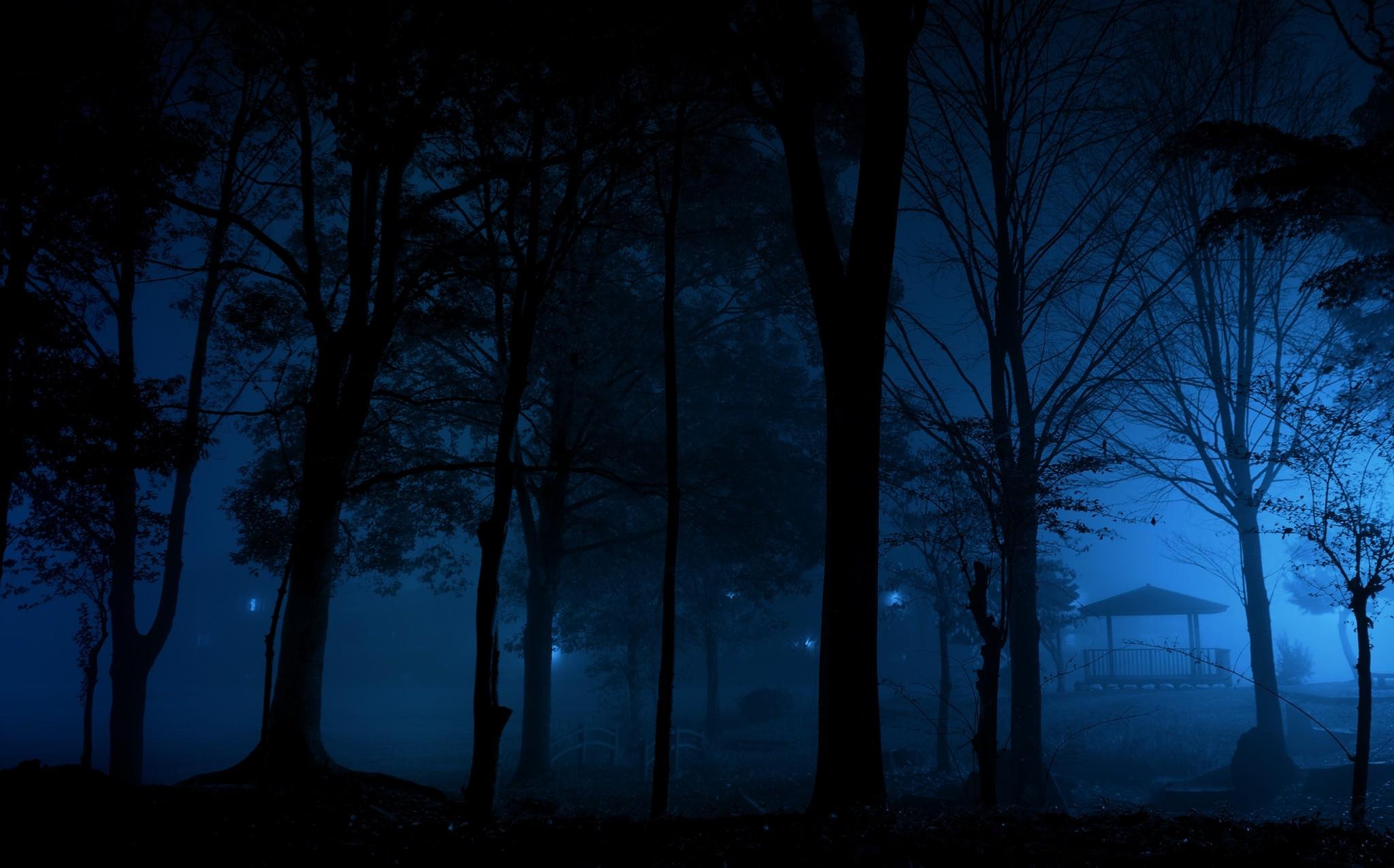 Night in the Forest Fond d'écran HD | Arrière-Plan | 2048x1276 | ID:729095 - Wallpaper Abyss