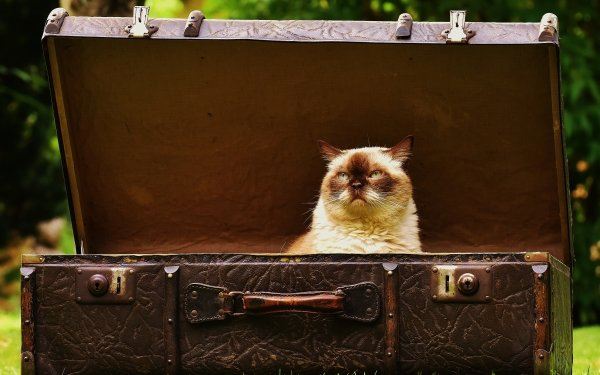 Animal Cat Cats Suitcase HD Wallpaper | Background Image