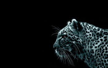 Animal - Tiger Wallpapers and Backgrounds ID : 73944