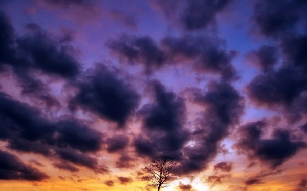 Earth Sky Nature Cloud Tree Sunset Purple Lonely Tree HD Wallpaper   Background Image