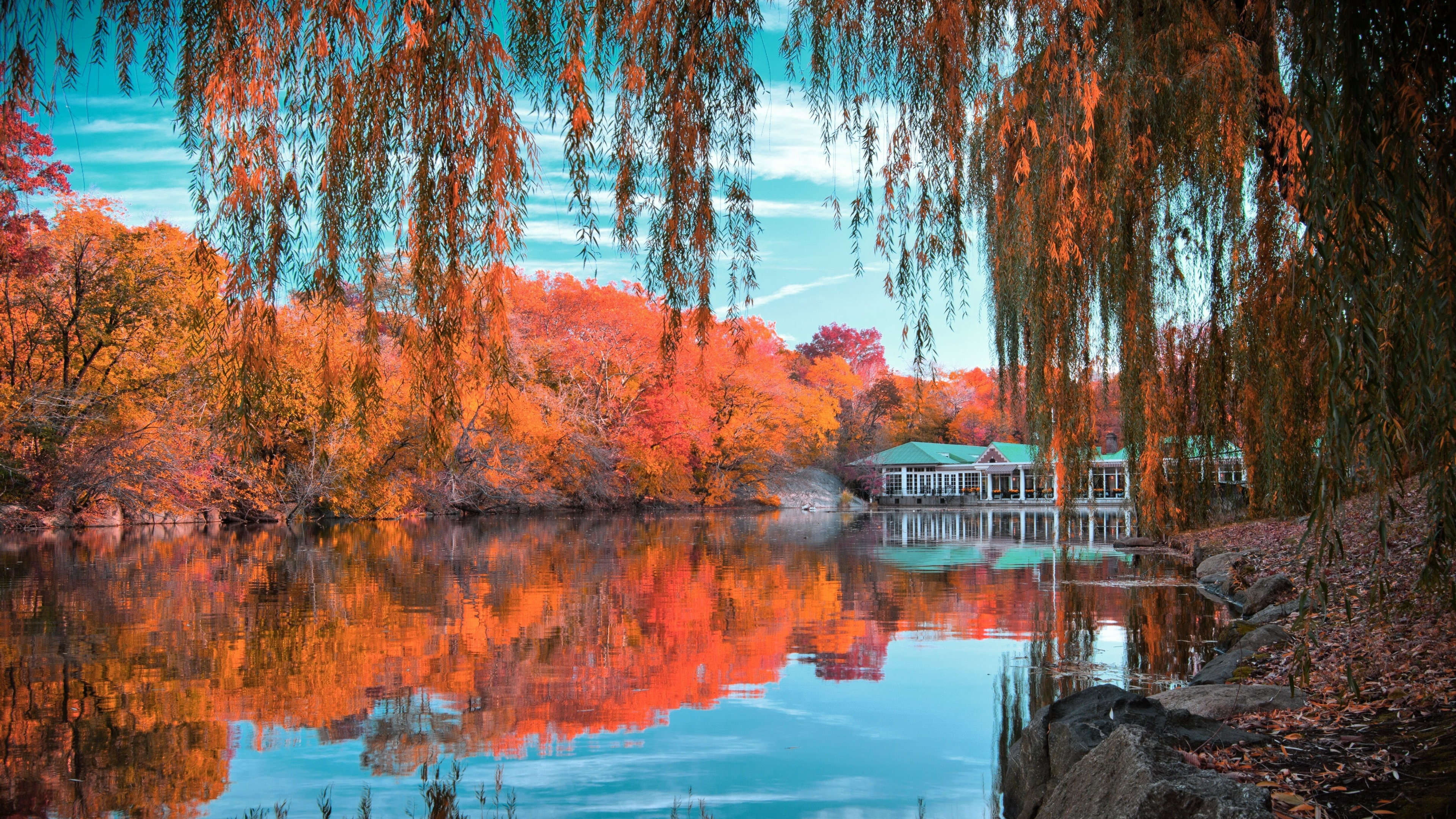 Central Park In Autumn 4k Ultra Hd Wallpaper Background Image