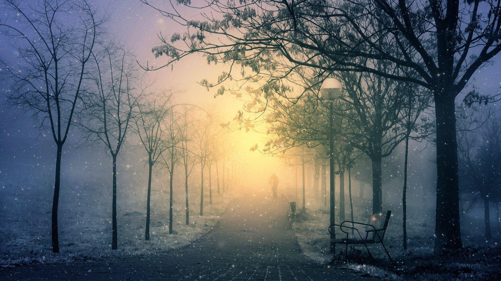 Earth - Winter  Snow Earth Night Park Fog Snowfall Wallpaper