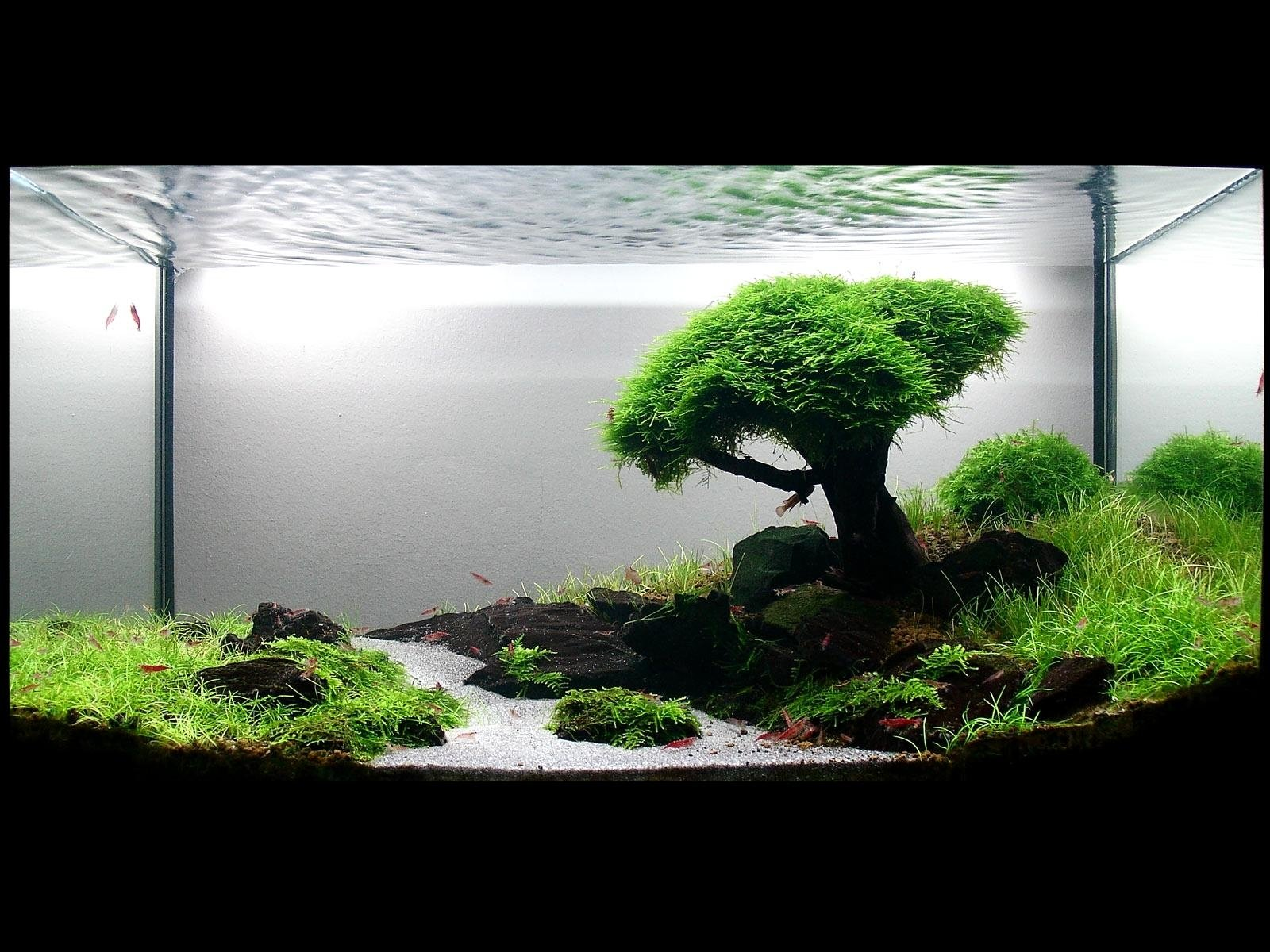 Fish Tank Hd Wallpapers Background Images