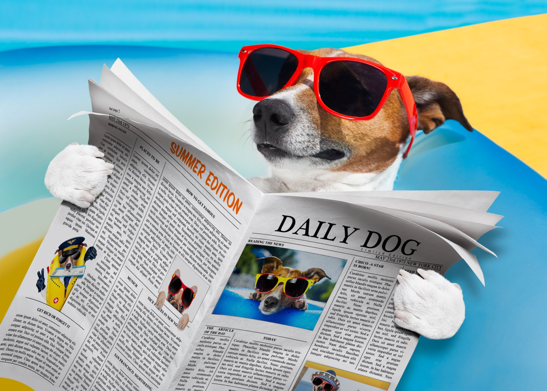Humor - Dog  Jack Russell Terrier Sunglasses Newspaper Summer Wallpaper