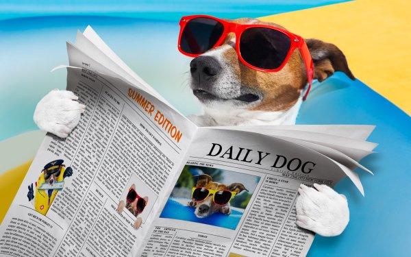 Humor Dog Jack Russell Terrier Sunglasses Newspaper Verano Fondo de pantalla HD | Fondo de Escritorio