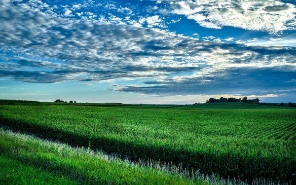 Earth Field USA Green Corn Iowa Horizon Landscape Nature HD Wallpaper | Background Image