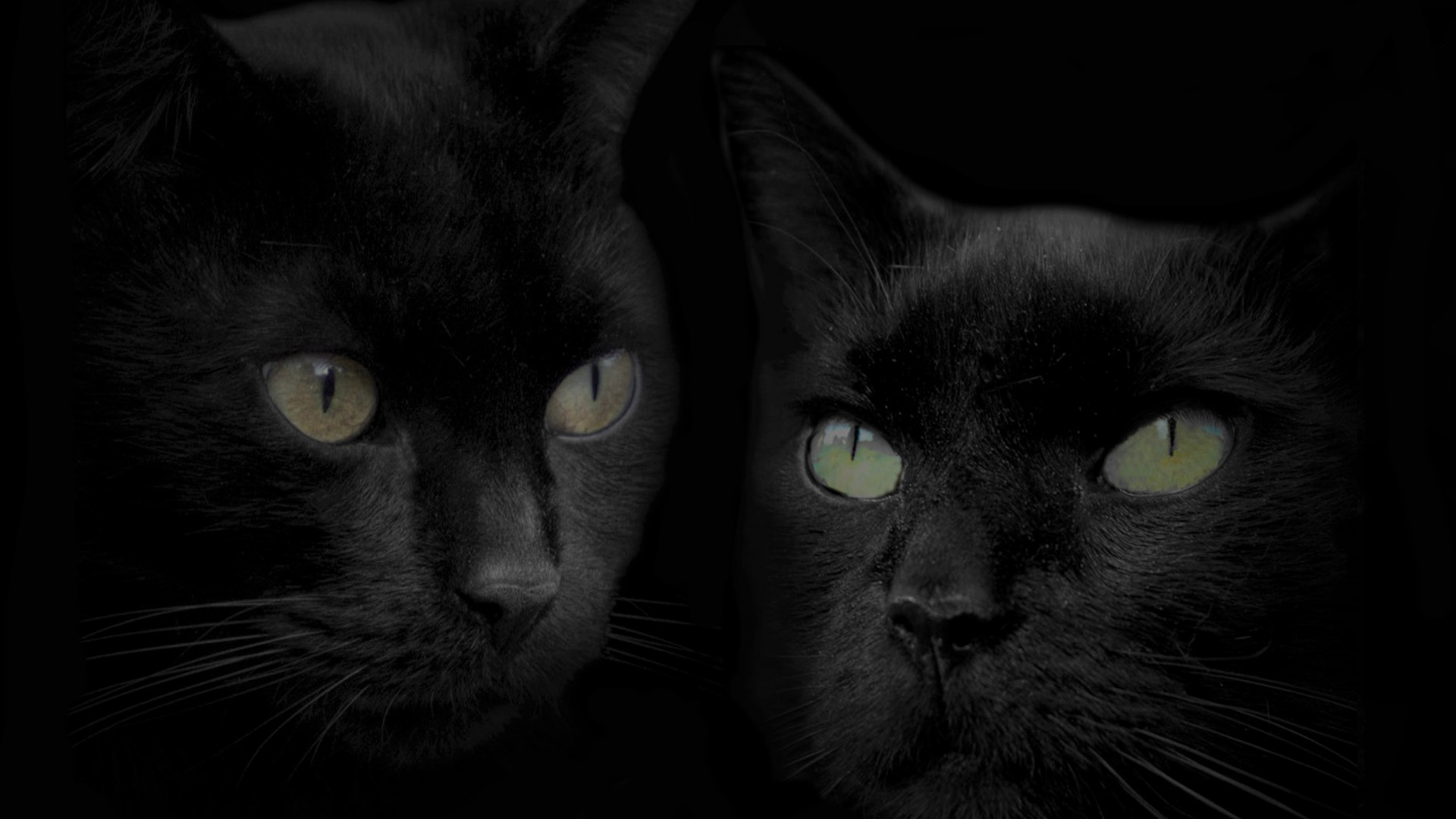 Black Cats Hd Wallpaper Background Image 1920x1080 Id 752446 Wallpaper Abyss