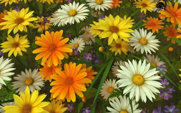 Artistic Flower Flowers Daisy Bee White Flower Yellow Flower HD Wallpaper   Background Image