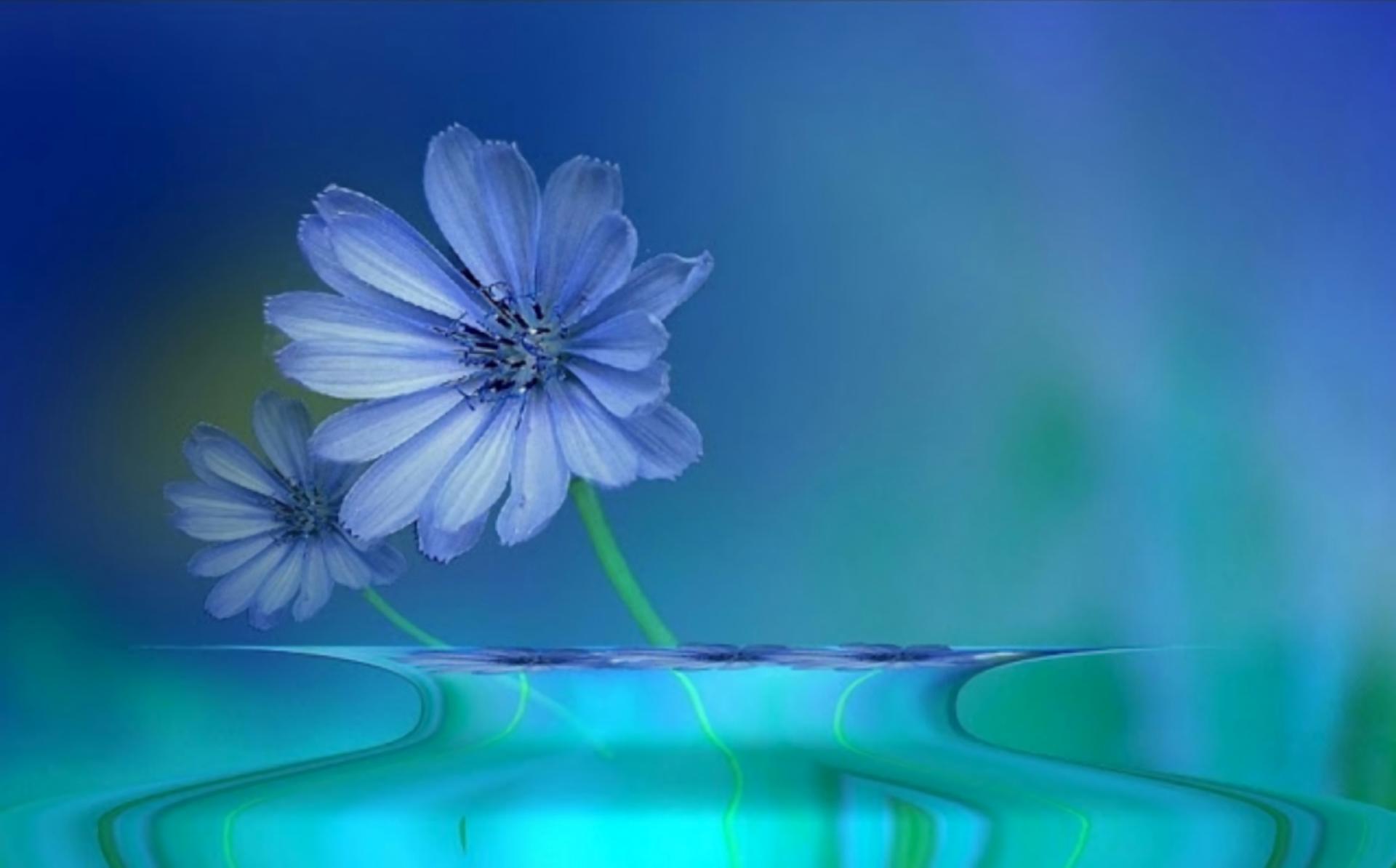 艺术 - 花  艺术 蓝色 水 倒影 Blue Flower 壁纸
