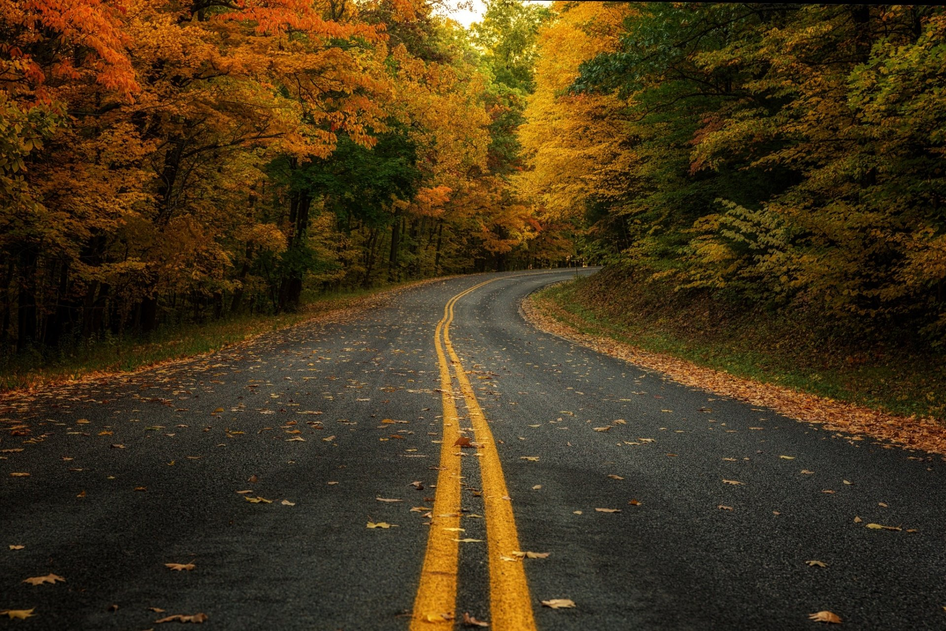 Man Made - Road  Nature Forest Fall Wallpaper