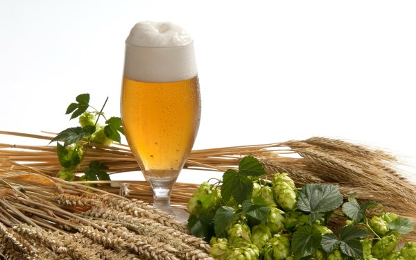Food Beer Still Life Hop Glass HD Wallpaper | Background Image