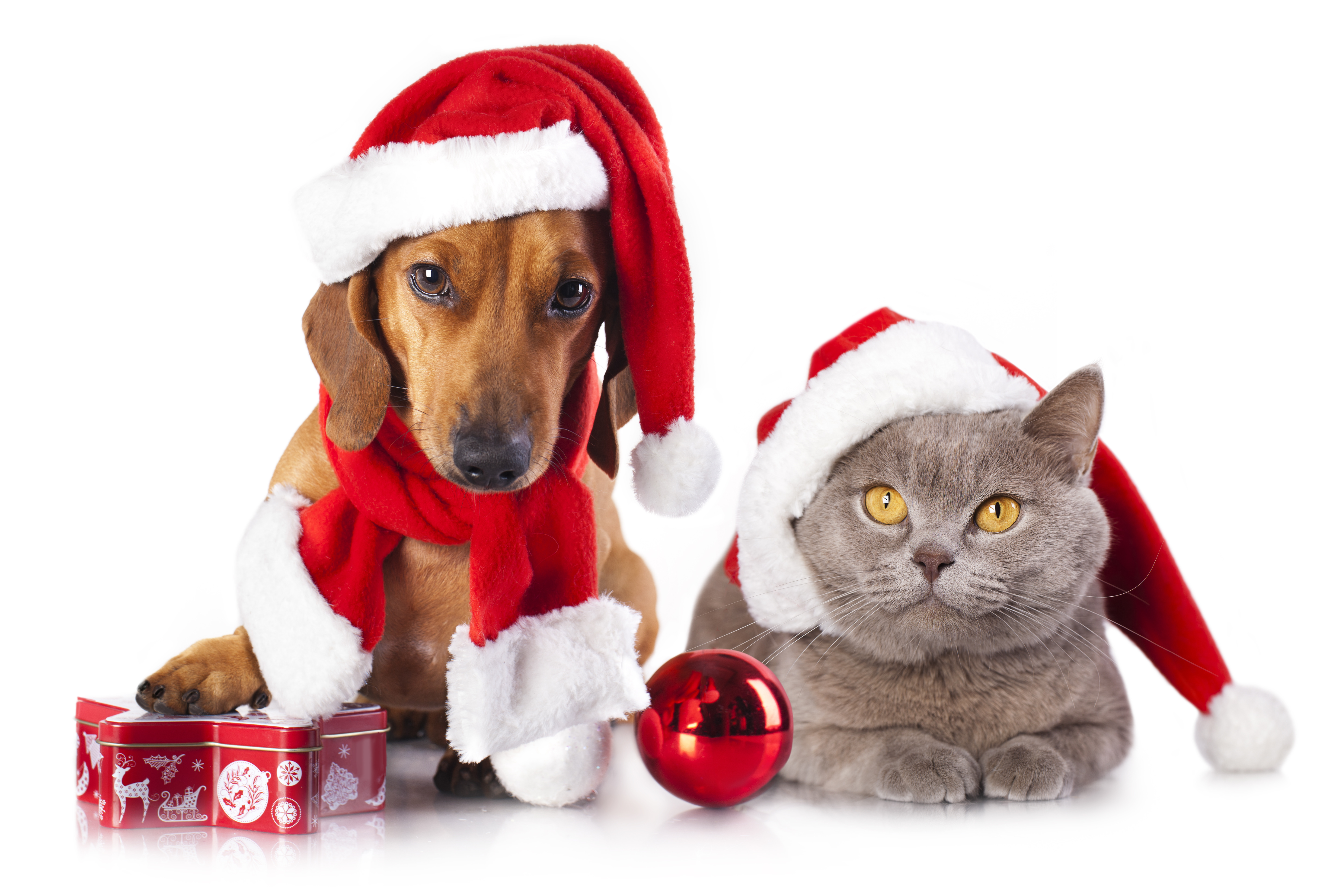 Cat in the hat ornaments - Holiday Christmas Holiday Dog Dachshund Cat Christmas Ornaments Wallpaper