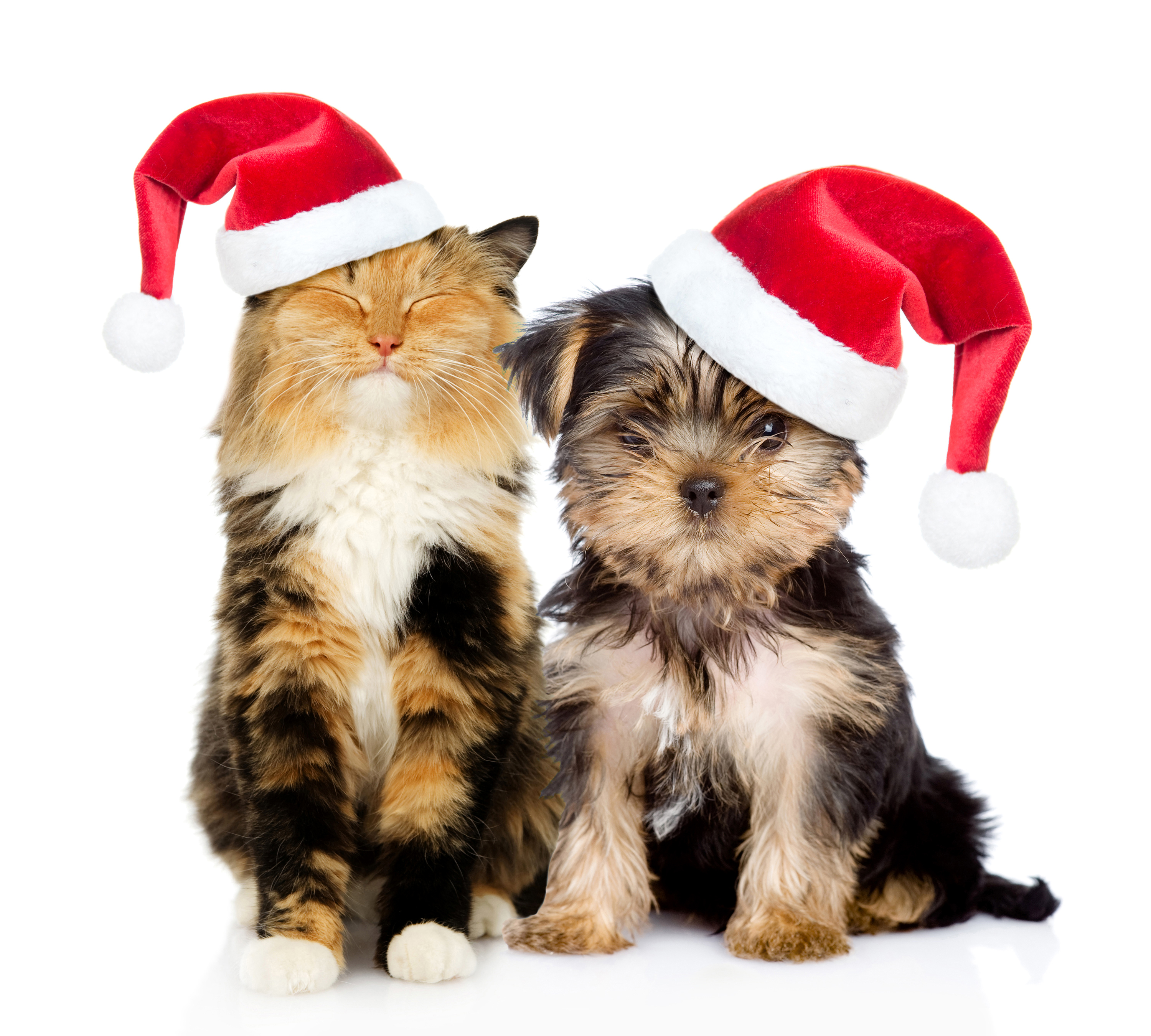 christmas cat and dog fond d 39 cran hd arri re plan. Black Bedroom Furniture Sets. Home Design Ideas