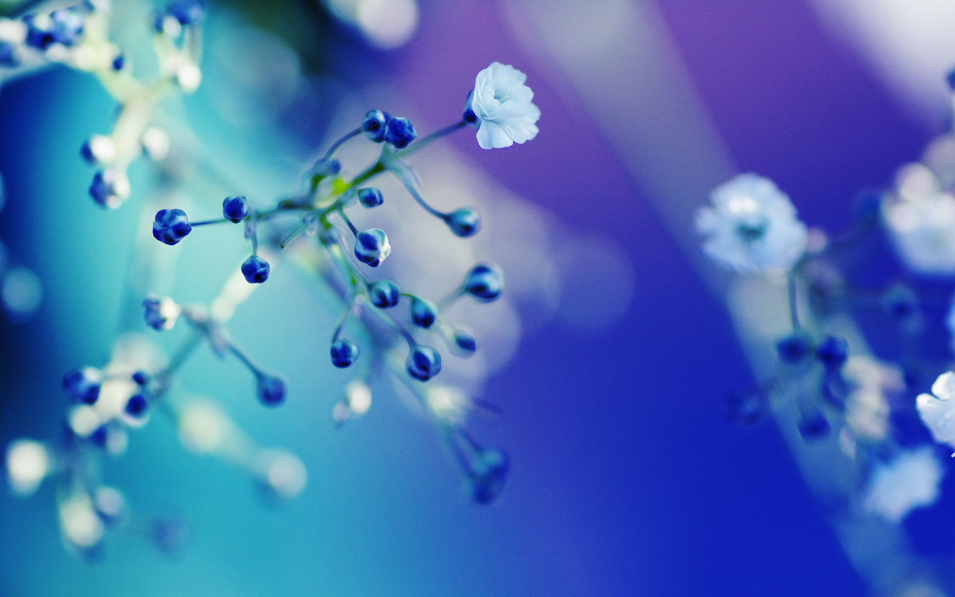 flower full hd wallpaper and background image | 1920x1200 | id:78376