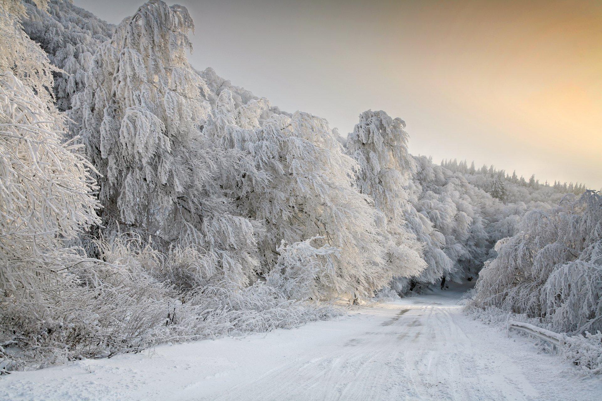 Earth - Winter  Earth Road Tree Snow White Wallpaper