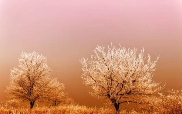 Earth Tree Trees Nature Winter orange Grass HD Wallpaper | Background Image
