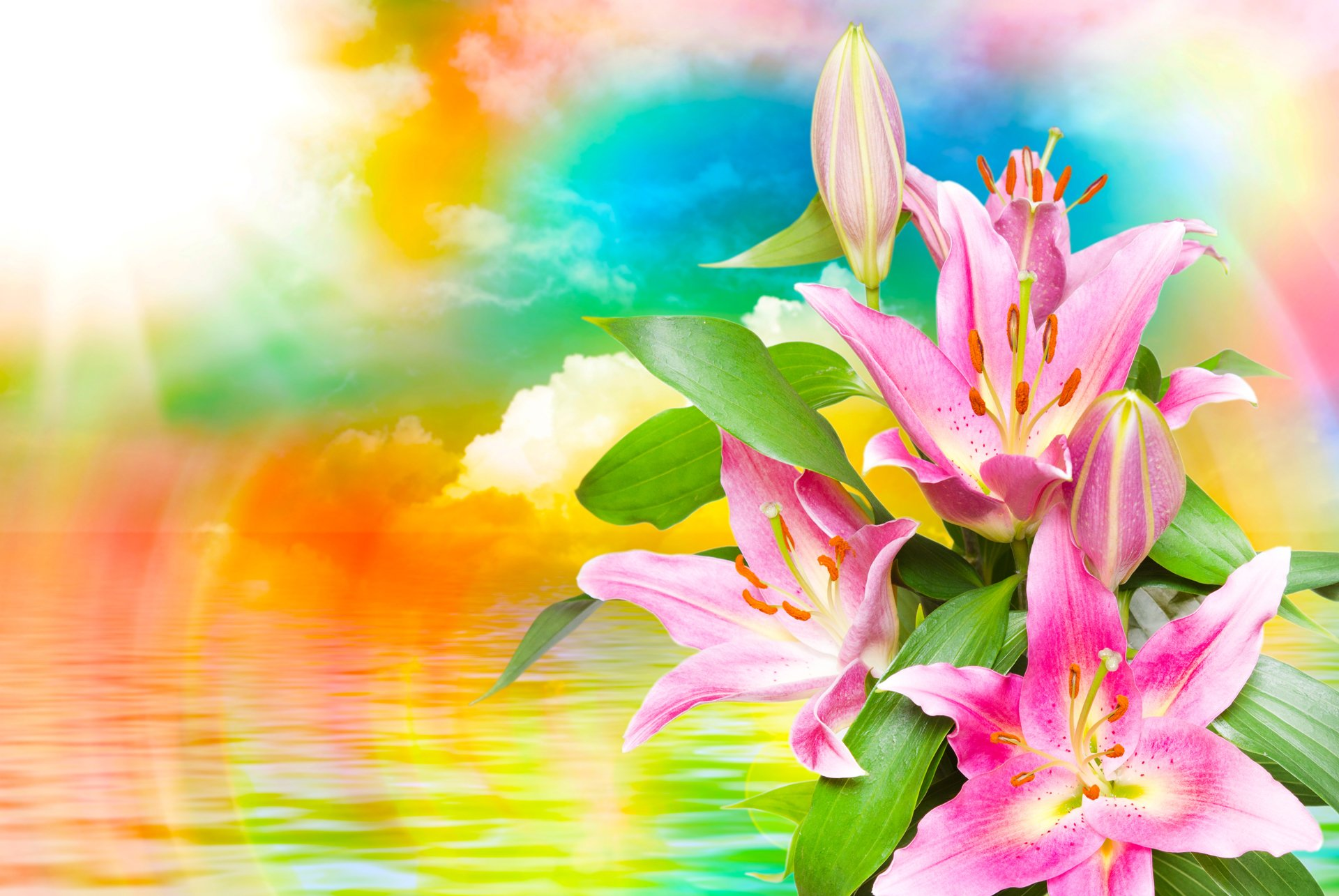 Artistic - Flower  Artistic Lily Colors Colorful Cloud Sunbeam Pink Flower Wallpaper