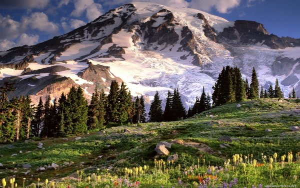 Earth Mountain Mountains Meadow Spring Tree Snow Ice Glacier Flower HD Wallpaper | Background Image