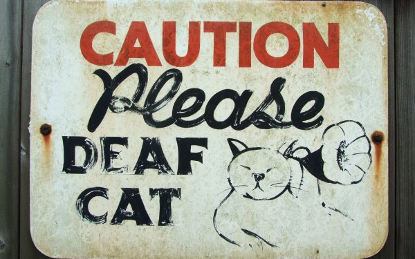 Humor Cat Cats Fail HD Wallpaper | Background Image