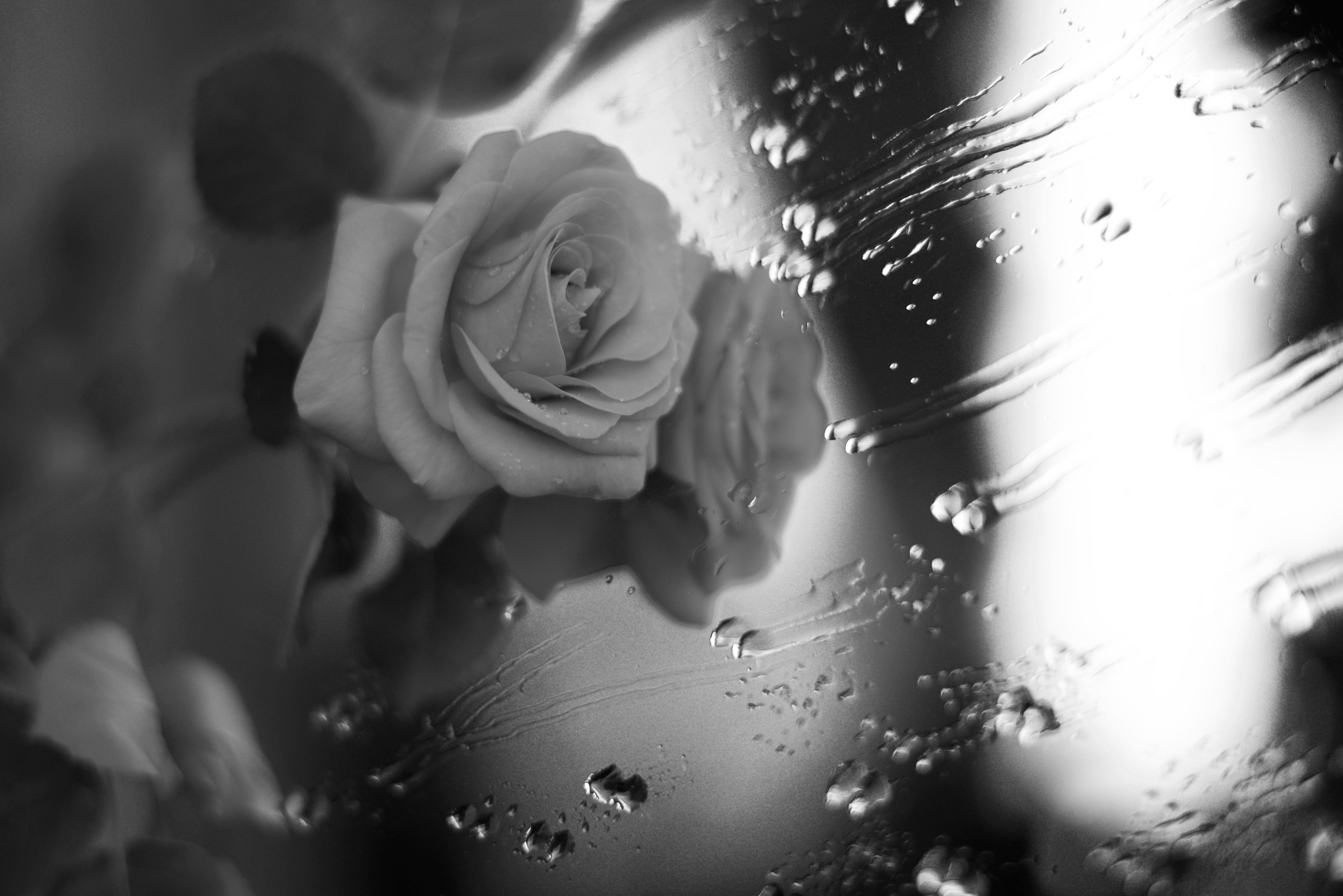 Rose near a window with rain drops 5k retina ultra hd wallpaper and photography black white rose flower water drop wallpaper altavistaventures Image collections