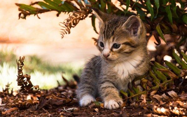 Animal Cat Cats Kitten Baby Animal Fern Blur Cute HD Wallpaper | Background Image