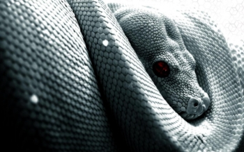 Animal - Snake Wallpapers and Backgrounds ID : 80196